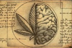 marihuana cerebro